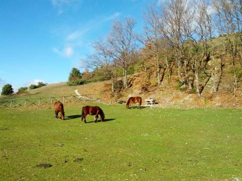 Campo invernale 2013 Pesaro 1 Fonte Luca