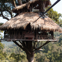 inspiring-ideas-striking-the-tree-steakhouse-jacksonville-fl-tree-house-guest-house-queenstown-the-tree-steakhouse-jacksonville-fl-tree-house-guest-house-tree-house-houses-for-sale-tree-hous