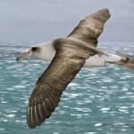 Logo del gruppo di Albatros