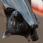 Logo del gruppo di Pipistrelli